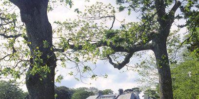 Branch, Plant, Tree, Woody plant, Park, Lawn, Trunk, Shade, Garden, Column,