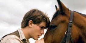 Halter, Bridle, Horse, Horse supplies, Vertebrate, Dress shirt, Working animal, Mammal, Horse tack, Rein,