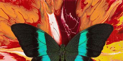 Arthropod, Insect, Pollinator, Butterfly, Invertebrate, Red, Wing, Moths and butterflies, Carmine, Paint,