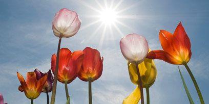 Nature, Natural environment, Plant, Flower, Petal, Pink, Magenta, Botany, Ecoregion, Spring,