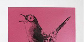 Bird, Vertebrate, Beak, Adaptation, Feather, Wing, Illustration, Rectangle, Poster, Perching bird,