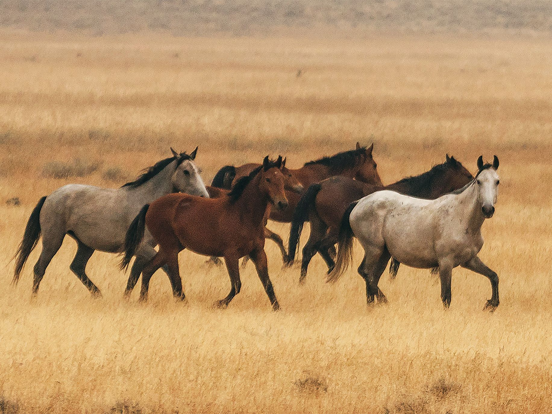 Feral Horses Fierce Controversy
