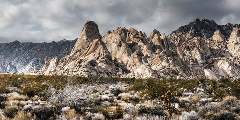 a view of the providence mountains from the desert floor in the mojave national preserve