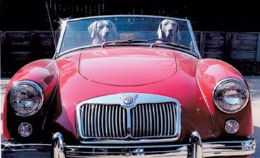 2005 10Best Animals Driving Cars