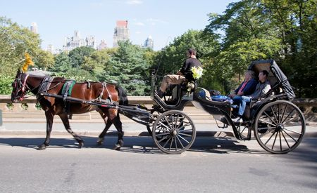 Hudson the Gelding + Carriage