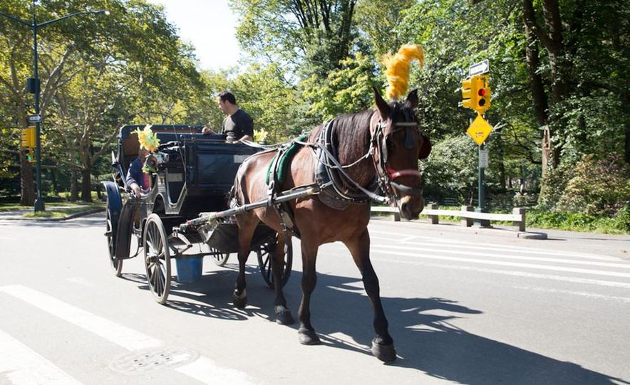 Can an Electric Car Really Replace Central Park's Horse-Drawn Carriages? - Slide 39