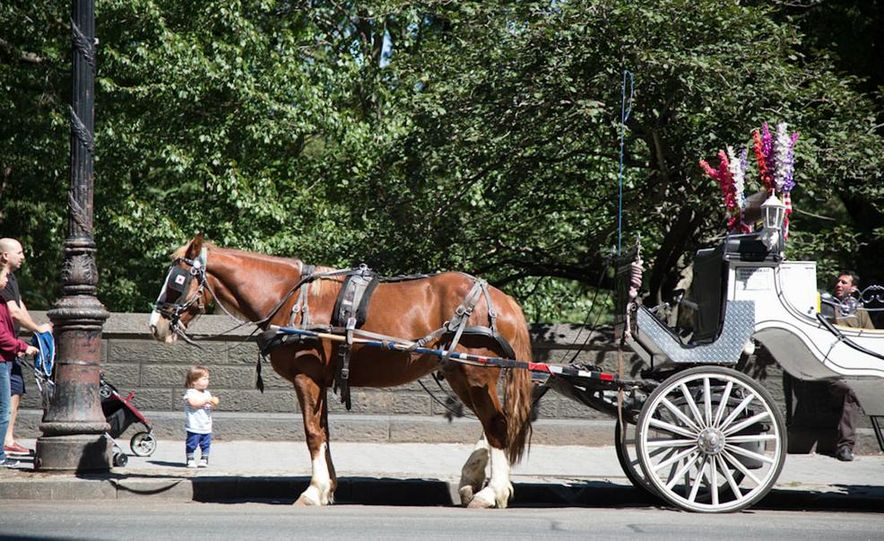 Can an Electric Car Really Replace Central Park's Horse-Drawn Carriages? - Slide 43