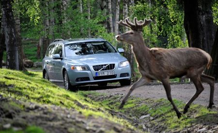 Volvo Developing Animal-Recognition Tech to Avoid Collisions with Wildlife