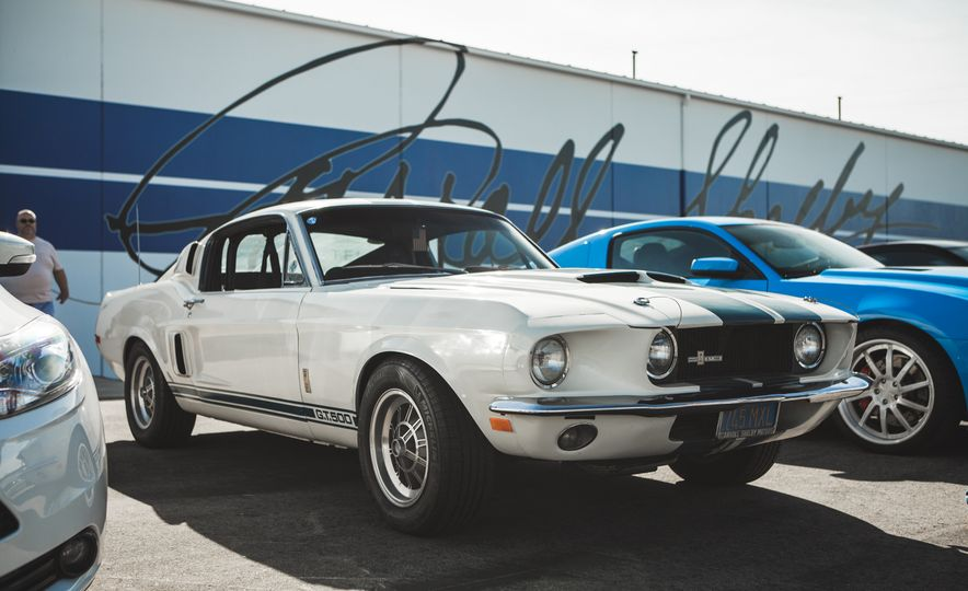 Shelby Mustang Stampede Classic Gt350s Gt500s Gather For