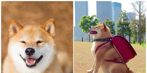 Dog, Carnivore, Vertebrate, Dog breed, Jaw, Snout, Dog supply, Collar, Pet supply, Canidae,
