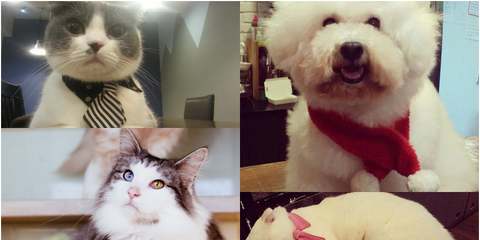 Organism, Vertebrate, Whiskers, Carnivore, Cat, Mammal, Felidae, Small to medium-sized cats, Dog, Facial expression,