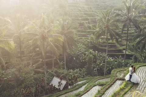 Plant, Plantation, Agriculture, Farm, Rural area, Botany, Arecales, Terrestrial plant, Garden, Field,