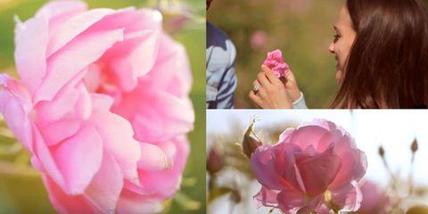Petal, Flower, Pink, Magenta, Flowering plant, Botany, Spring, Wildflower, Rose family, Annual plant,
