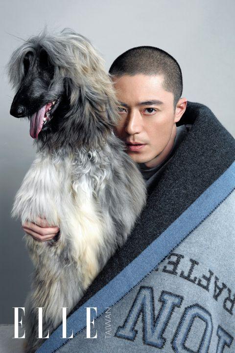 Dog, Canidae, Dog breed, Fur, Irish wolfhound, Companion dog, Snout, Carnivore, Photography, Photo caption,
