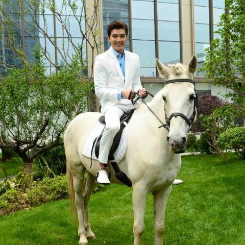 Horse, Bridle, Mammal, Vertebrate, Halter, Horse tack, Rein, Horse supplies, Equestrianism, Equestrian helmet,