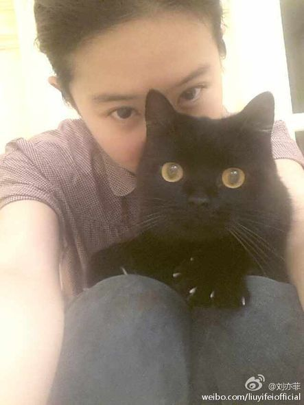 Cat, Hair, Small to medium-sized cats, Felidae, Black cat, Whiskers, Skin, Nose, Eye, Selfie,