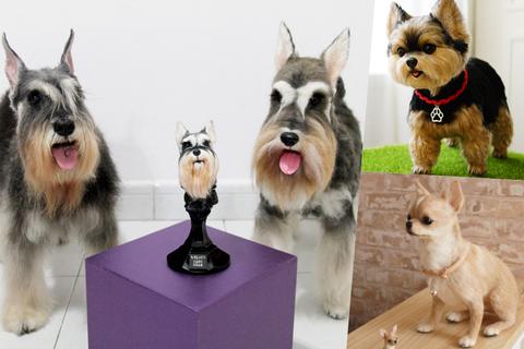 Dog breed, Dog, Vertebrate, Carnivore, Snout, Terrier, Pet supply, Dog supply, Schnauzer, Fur,
