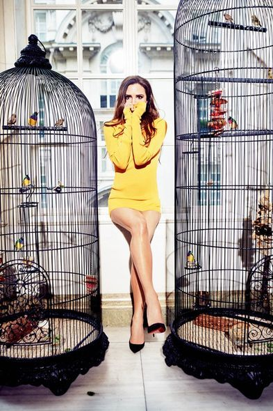 Cage, Vertebrate, Dress, Pet supply, Bird supply, Bird, Foot, Iron, Dog supply, One-piece garment,