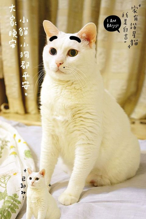 Yellow, Vertebrate, Skin, Organism, Whiskers, Felidae, Small to medium-sized cats, Cat, Carnivore, Facial expression,
