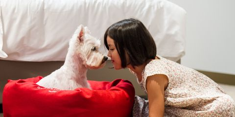 Comfort, Dog breed, Dog, Sitting, Carnivore, Terrier, Dog supply, Linens, Companion dog, Pet supply,