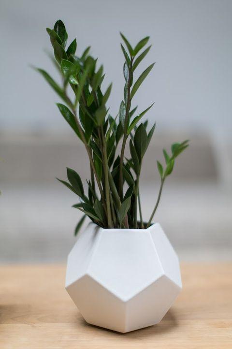 Leaf, Vase, Plant stem, Annual plant, Still life photography, Flowerpot, Artifact,