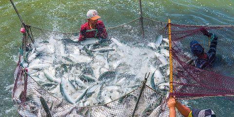 Fun, Recreation, Leisure, Fluid, Net, Outdoor recreation, Fishing net, Fishing, Adventure, Fisherman,