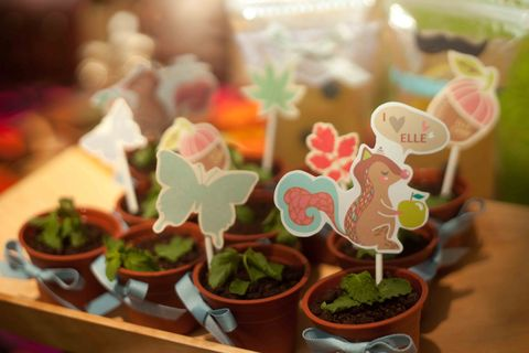 Flowerpot, Interior design, Terrestrial plant, Houseplant, Toy, Fictional character, Annual plant, Herb, Pottery, Livestock,