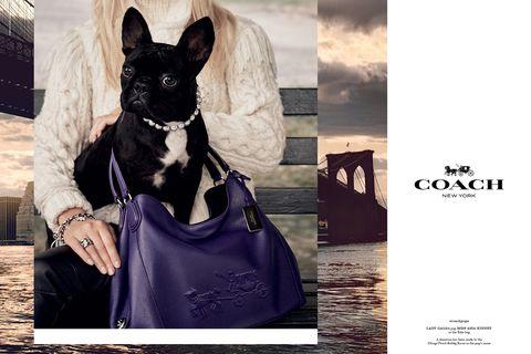 Collar, Dog, Black, Carnivore, Snout, Dog collar, Dog breed, Pet supply, Working animal, Shoulder bag,
