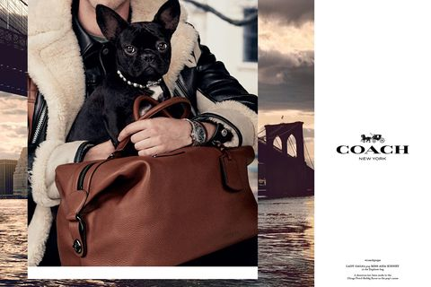 Bag, Carnivore, Dog breed, Dog, Collar, Shoulder bag, Luggage and bags, Snout, Canidae, Working animal,