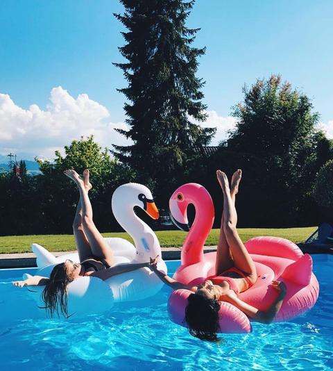 Fluid, Leisure, Summer, Swimming pool, Bird, Water bird, Inflatable, Waterfowl, Flamingo, Ducks, geese and swans,
