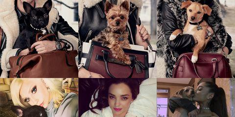 Vertebrate, Dog breed, Dog, Carnivore, Collage, Snout, Fur, Companion dog, Toy dog, Pet supply,