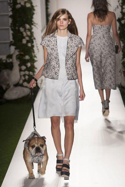 Clothing, Leg, Dog breed, Brown, Shoulder, Dog, Human leg, Joint, Carnivore, Leash,