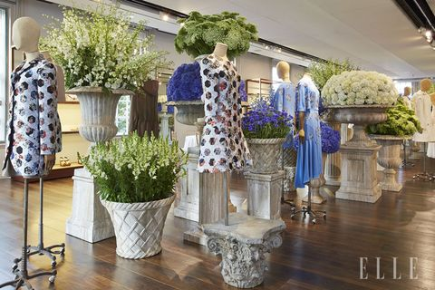 Plant, Flowerpot, Flooring, Floor, Interior design, Hardwood, Lavender, Houseplant, Flower Arranging, Wood flooring,