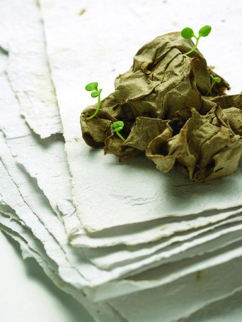 Green, Leaf, Botany, Ingredient, Terrestrial plant,