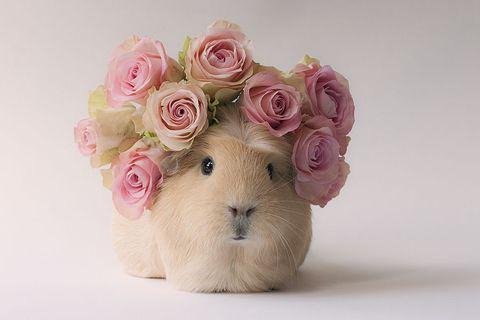 Petal, Flower, Toy, Bouquet, Pink, Cut flowers, Flowering plant, Peach, Stuffed toy, Rose family,