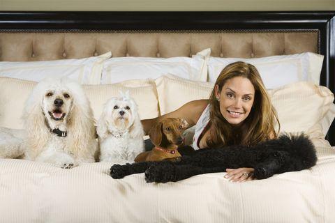 Dog breed, Comfort, Vertebrate, Dog, Textile, Carnivore, Couch, Interior design, Sporting Group, Dog supply,