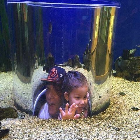 Fluid, Hat, Cap, Aquarium decor, Freshwater aquarium, Majorelle blue, Fish supply, Transparent material, Underwater, Fish,
