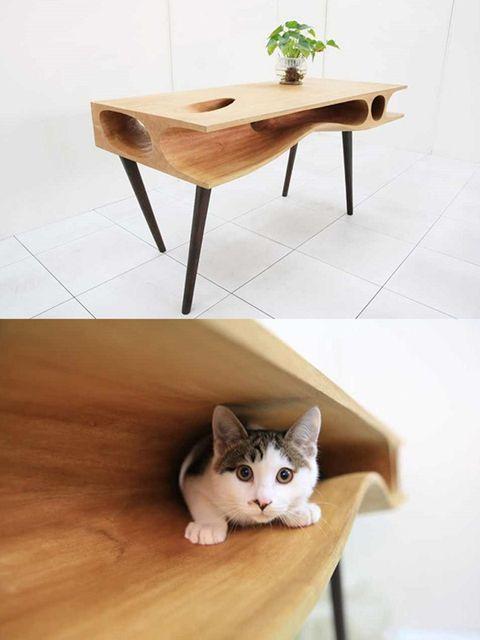 Wood, Felidae, Small to medium-sized cats, Vertebrate, Hardwood, Flooring, Whiskers, Cat, Floor, Carnivore,