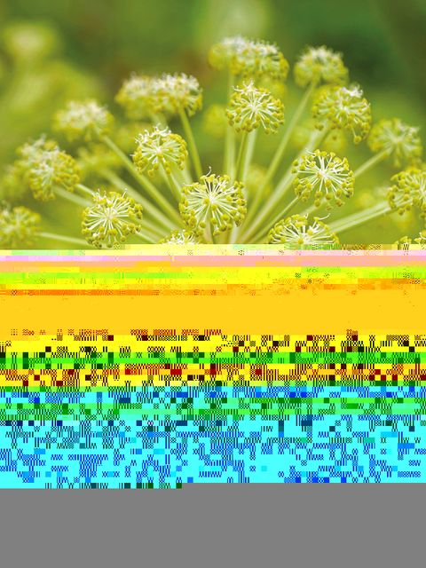 Green, Yellow, Colorfulness, Majorelle blue, Perennial plant, Herbaceous plant, Pedicel, Parsley family, Wildflower, Forb,