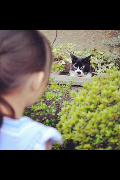 Green, Organism, Vertebrate, Felidae, Small to medium-sized cats, Mammal, Cat, Carnivore, T-shirt, Whiskers,