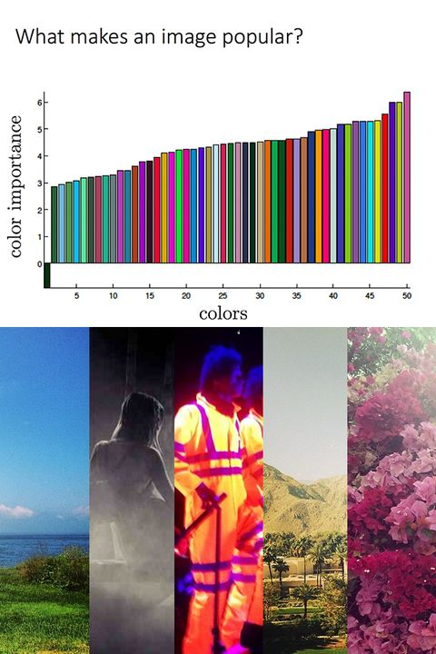 Magenta, Colorfulness, Pink, Adaptation, Purple, Workwear, Blossom, Graphic design, Rhododendron,