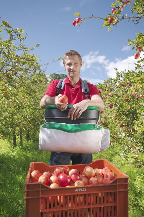 Local food, Produce, Whole food, People in nature, Food, Natural foods, Fruit, Ingredient, Farm, Apple,