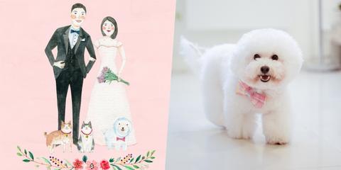 Vertebrate, Mammal, Dog, Pink, Formal wear, Dress, Dog breed, Carnivore, Toy dog, Snout,