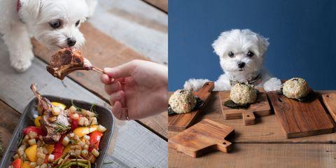 Dog breed, Vertebrate, Dog, Organism, Mammal, Carnivore, Toy dog, Produce, Puppy, Snout,