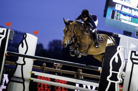 Bridle, Halter, Horse, Vertebrate, Horse tack, Shoe, Horse supplies, Animal sports, Rein, Equestrian sport,