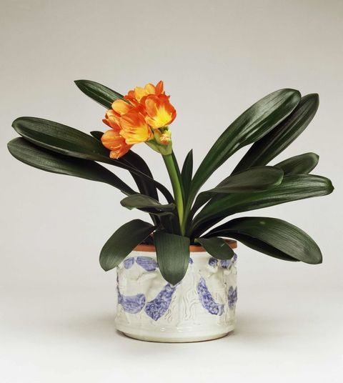 Petal, Flower, Flowerpot, Botany, Flowering plant, Terrestrial plant, Artifact, Vase, Interior design, Still life photography,