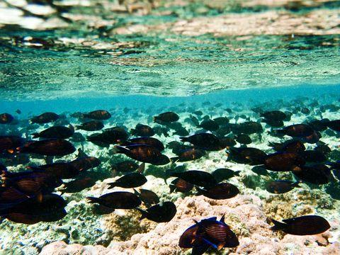 Body of water, Organism, Underwater, Fluid, Vertebrate, Water, Fish, Turquoise, Liquid, Marine biology,
