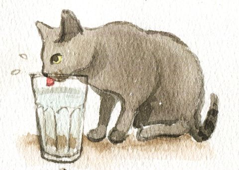 Organism, Carnivore, Line, Felidae, Snout, Terrestrial animal, Art, Whiskers, Cat, Small to medium-sized cats,