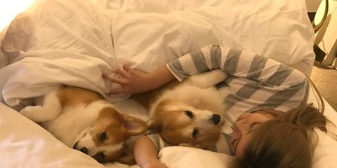 Comfort, Dog breed, Dog, Carnivore, Mammal, Linens, Bedtime, Sleep, Bed, Bedding,