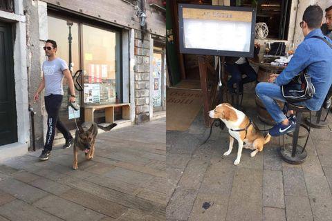 Human, Dog breed, Leg, Vertebrate, Dog, Mammal, Carnivore, Jeans, Collar, Denim,